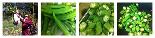 Okra Collage